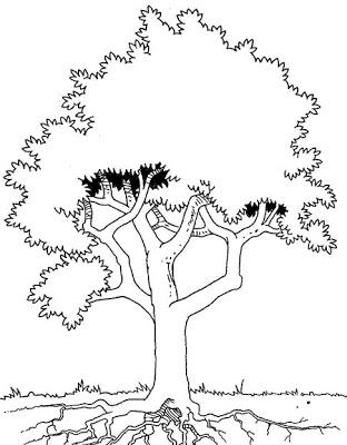 rvore para colorir - Atividades para o Dia da árvore